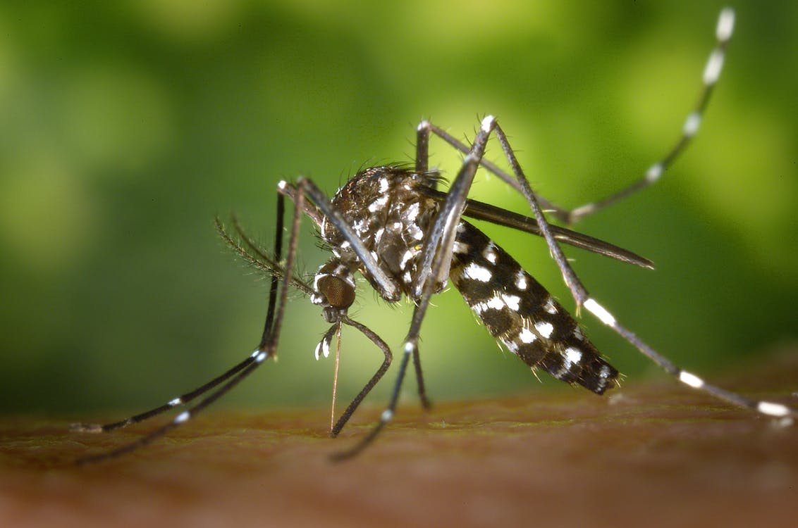 Kako otjerati komarce
