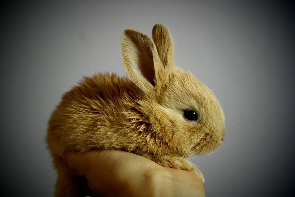 STOP testiranju na životinjama!